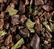 Infusion - Cacao Menthe - 100g - Dammann